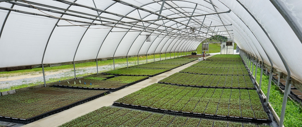 Custom Grown Plant Starts | Banner Greenhouses
