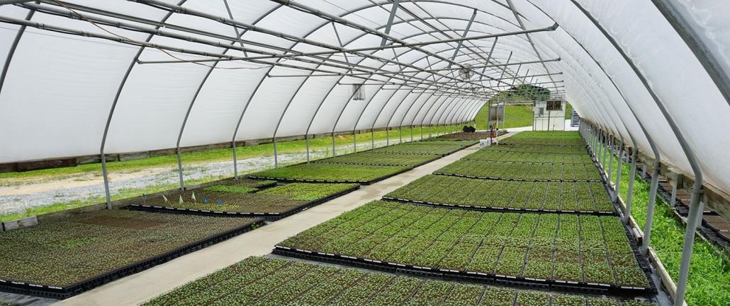 Custom Grown Plant Starts | Banner Greenhouses