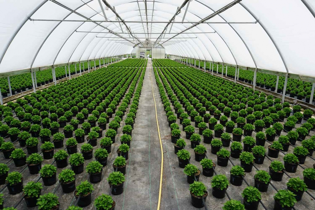 About Us | Banner Greenhouses