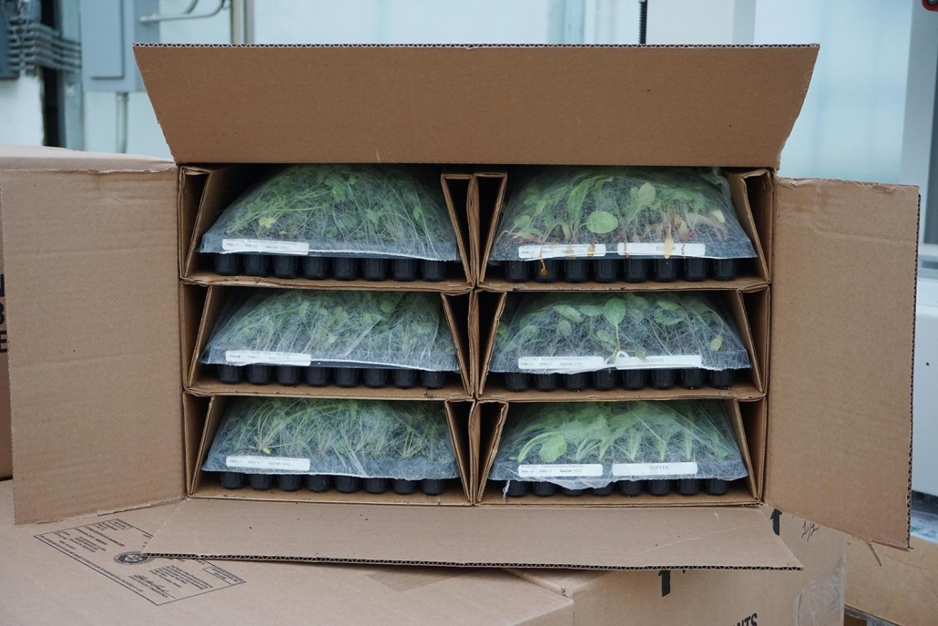Shipping and Delivery | Banner Greenhouses
