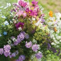 Beneficial Insect Mix