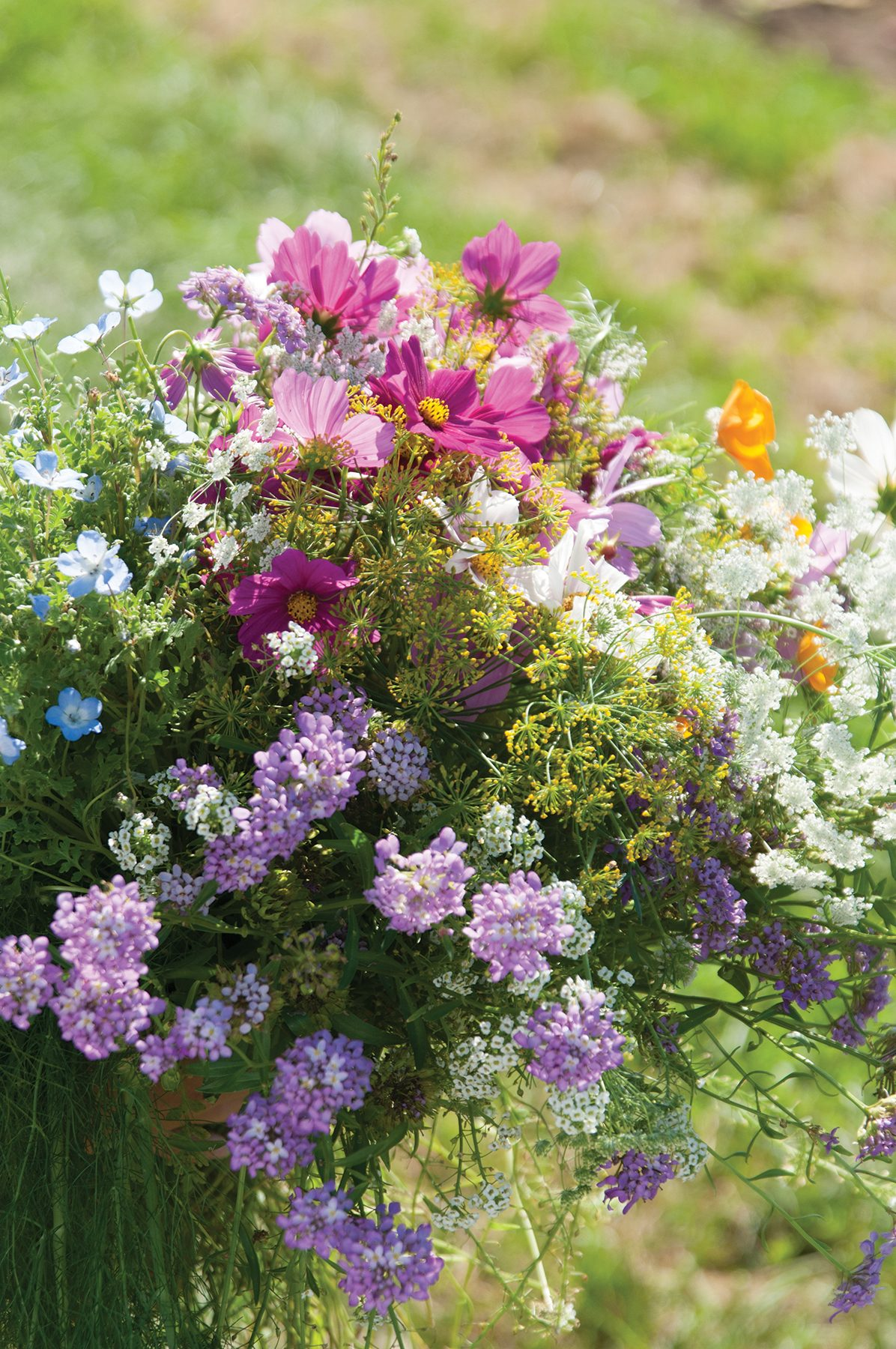 Beneficial Insect Mix Assorted Wildflowers