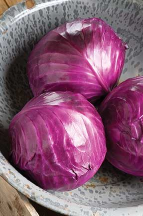 Ruby Perfection Cabbage