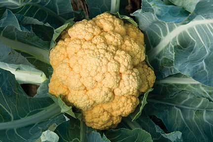 Cheddar Cauliflower