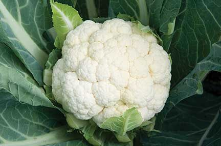 Flame Star Cauliflower