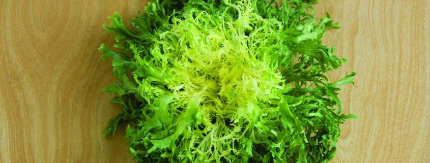 Rhodos Chicory CA