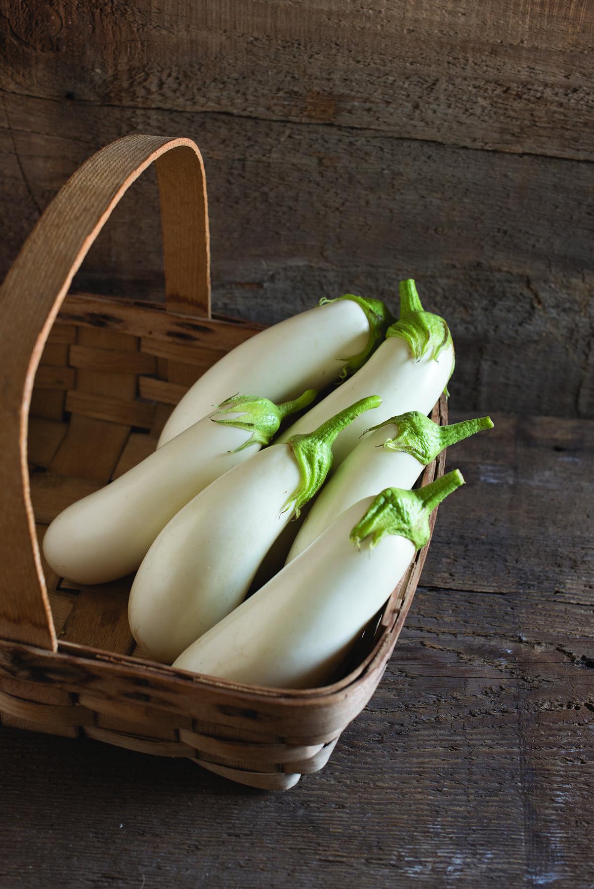 Aretussa Eggplant