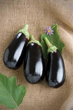 Nadia Eggplant