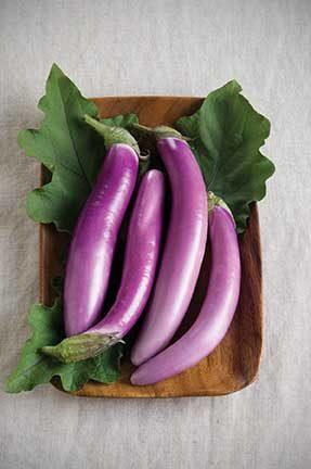 Orient Charm Eggplant