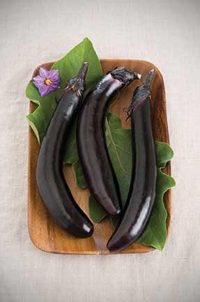 Orient Express Eggplant