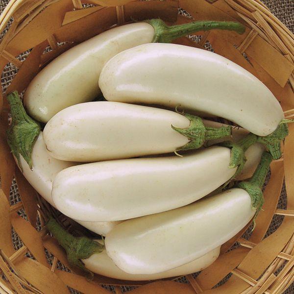 Snowy Eggplant