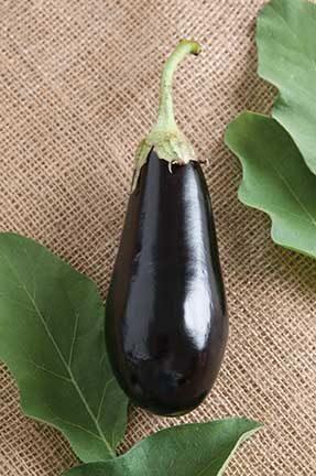 Traviata Eggplant