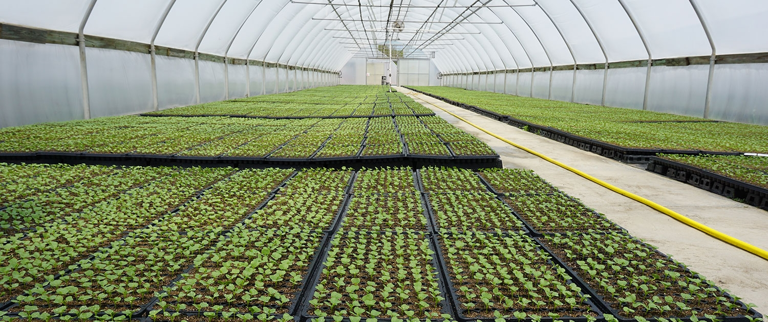Certified Organic   Banner Greenhouses
