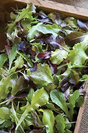 All Star Salad Mix  Lettuce