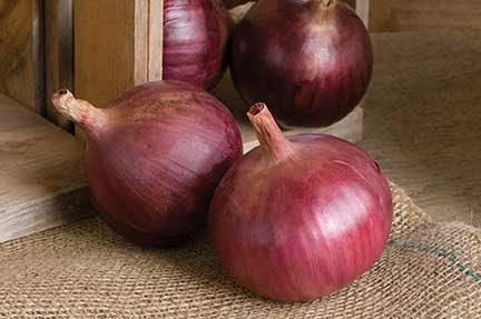 Cabernet Onion