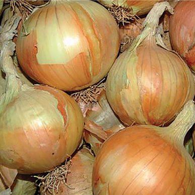 Gabriella Onion