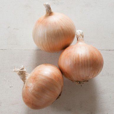 Zoey Onion