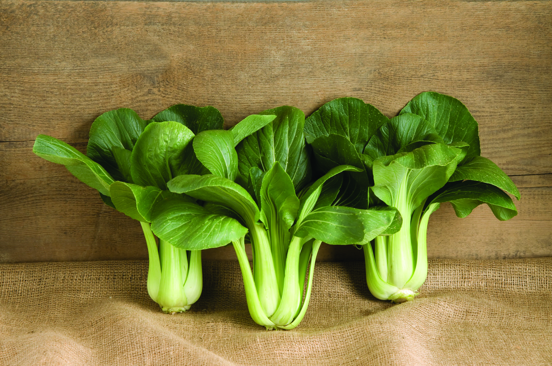 Black Summer Pac Choi