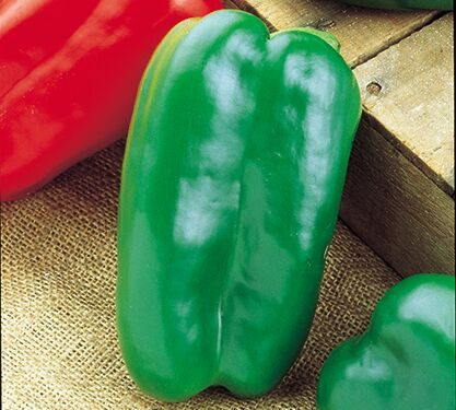 Big Bertha Pepper CA