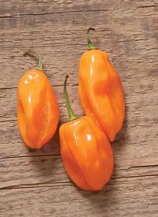 Habanero Pepper CA