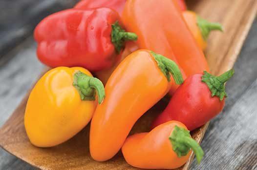 Lunchbox Pepper