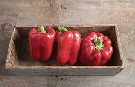 Red Knight (Red Bell) Pepper