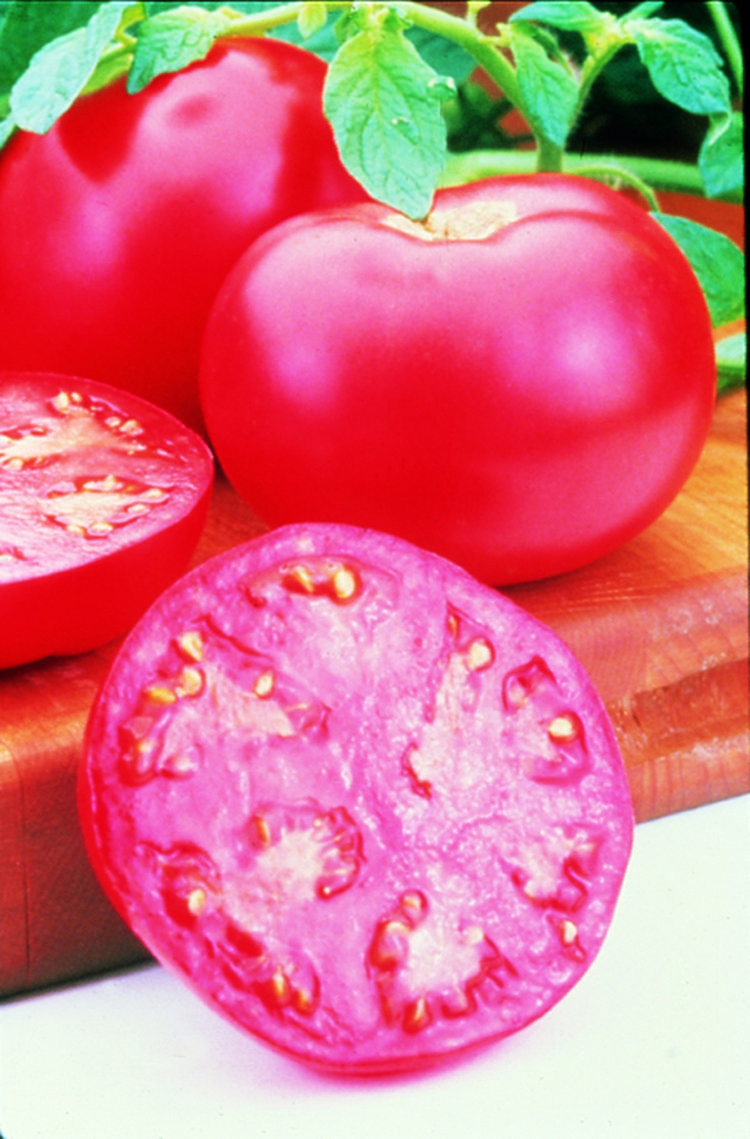 Pink Girl Grafted Tomato
