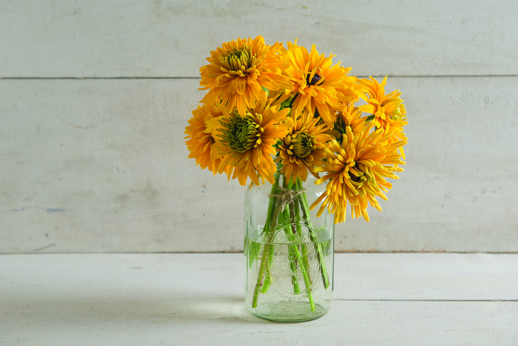 Goldilocks Rudbeckia