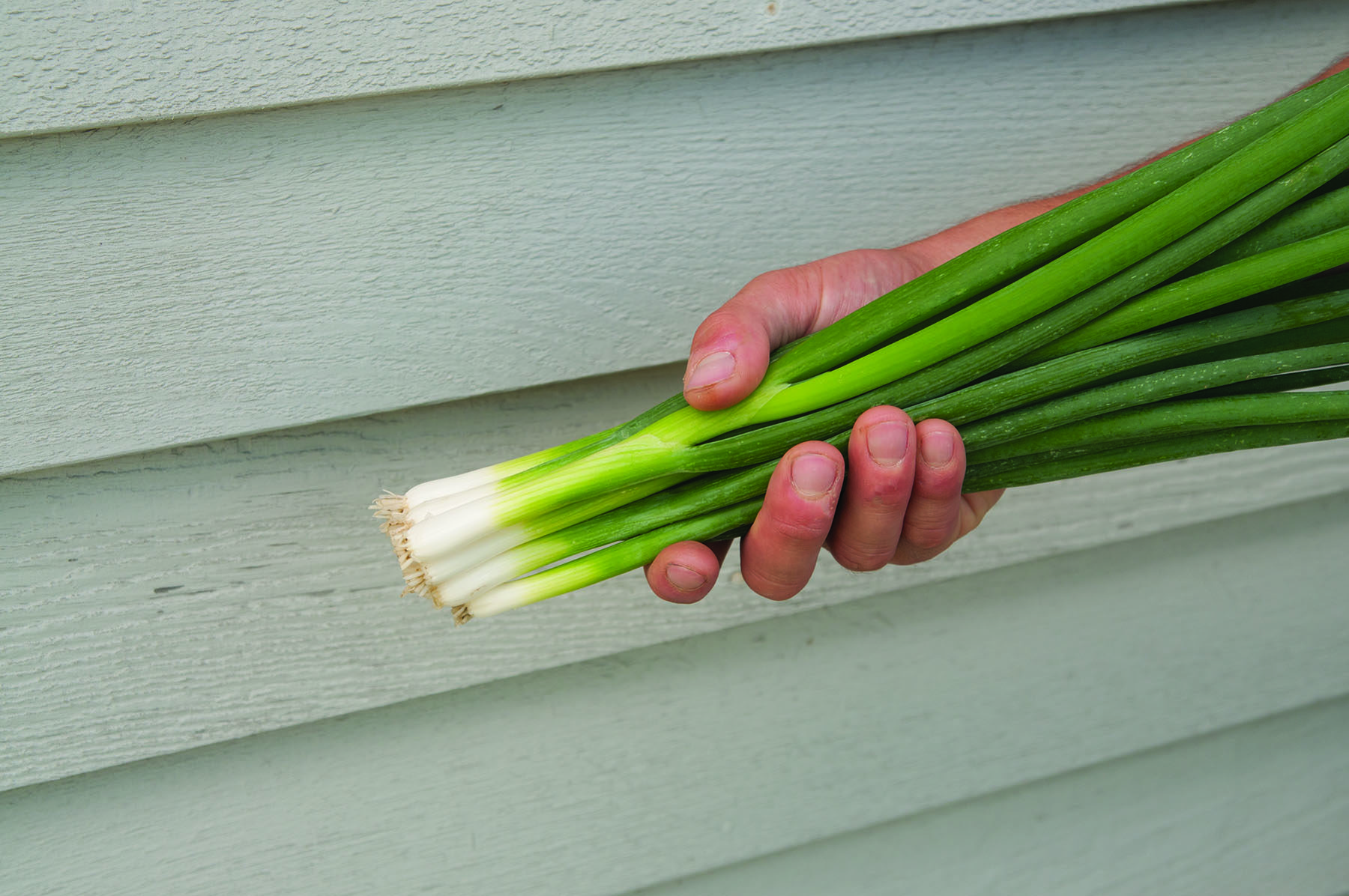 Nabechan Scallion