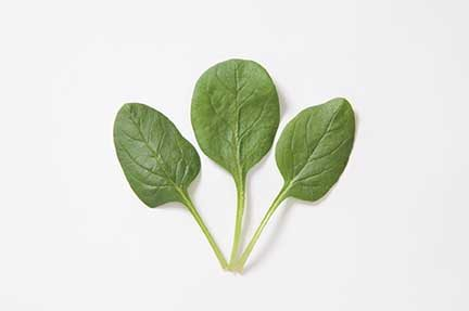 Space Spinach