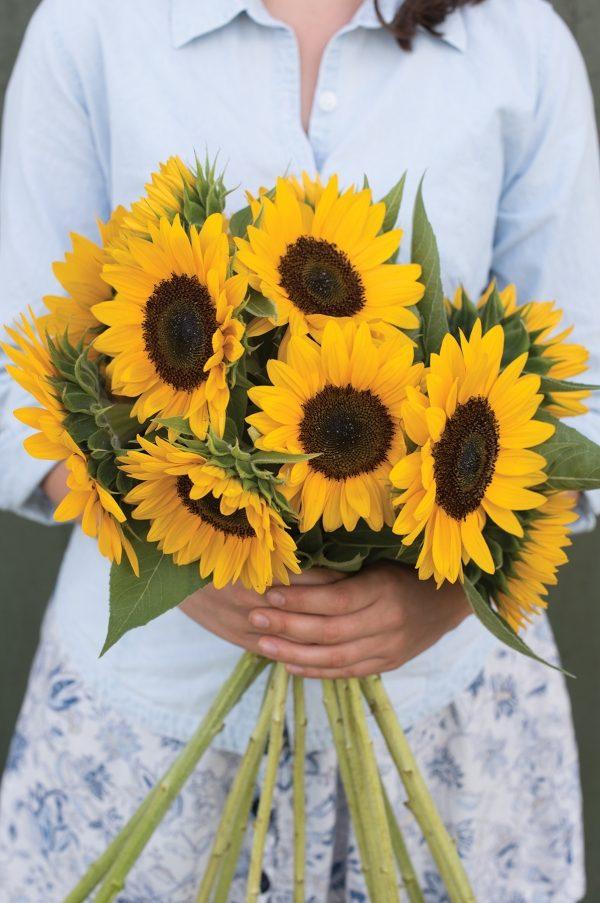 Sunrich Sunflower