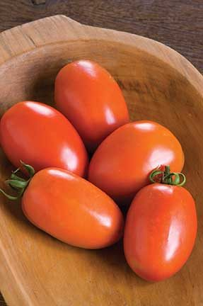 Amish Paste Grafted Tomato