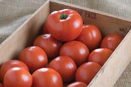 BHN-1021 Tomato