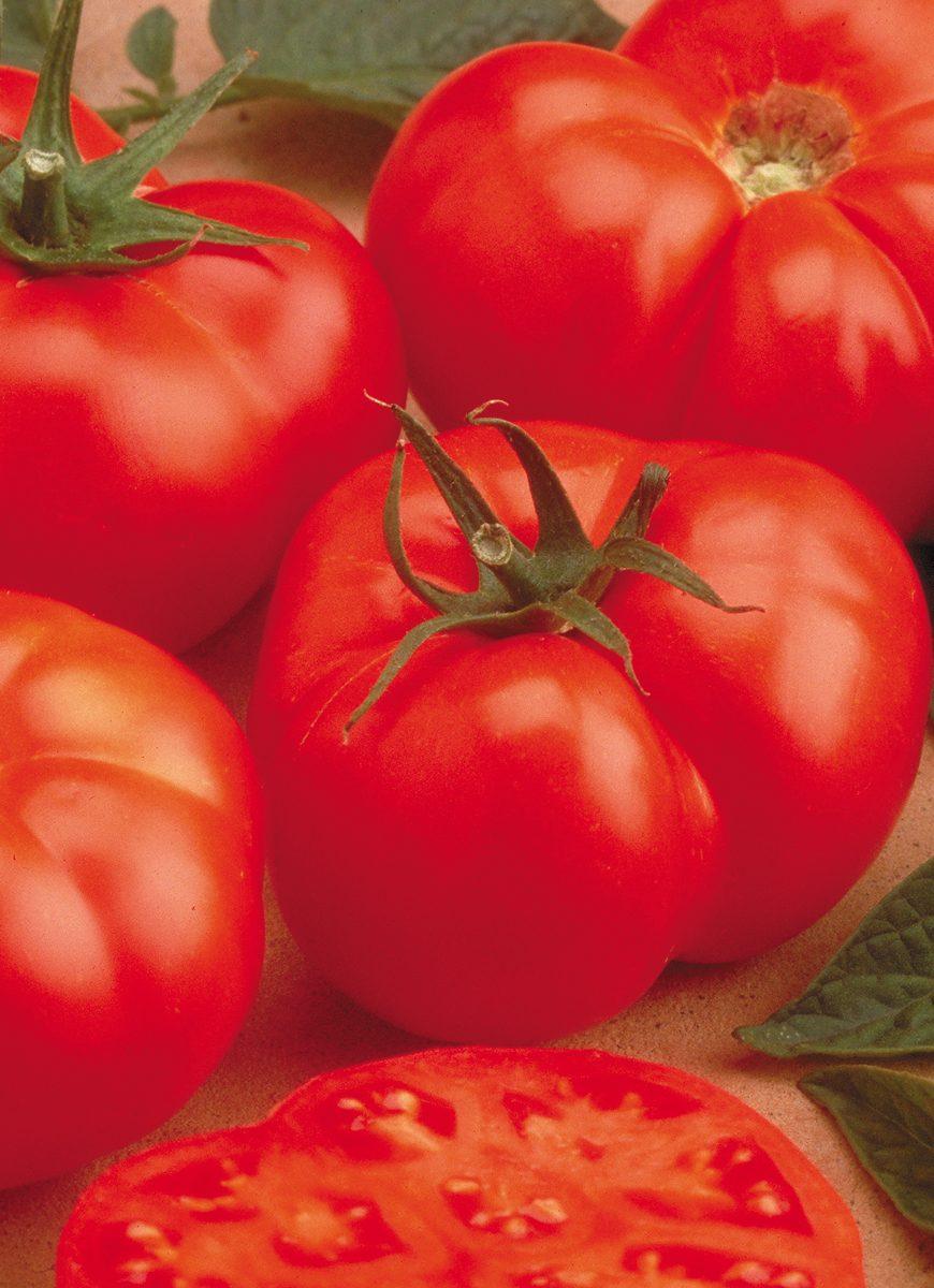 Beefmaster Tomato