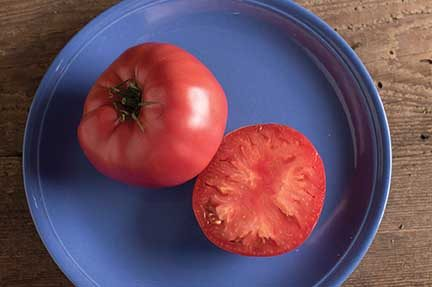 Brandywine Grafted Tomato