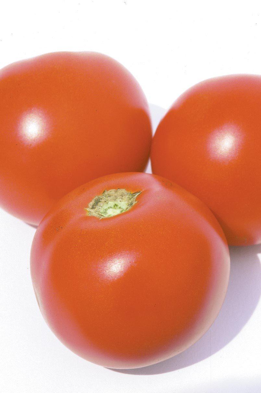 Estiva Tomato