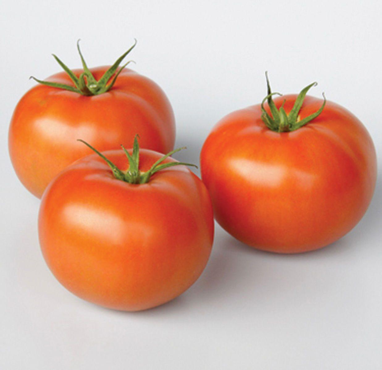 Frederik Tomato