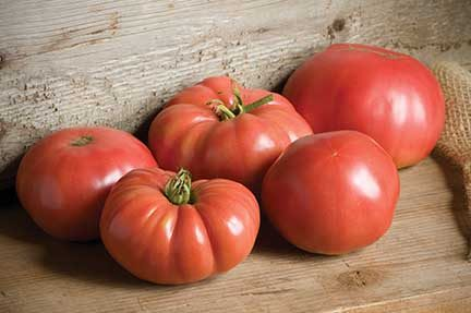 German Johnson Grafted Tomato