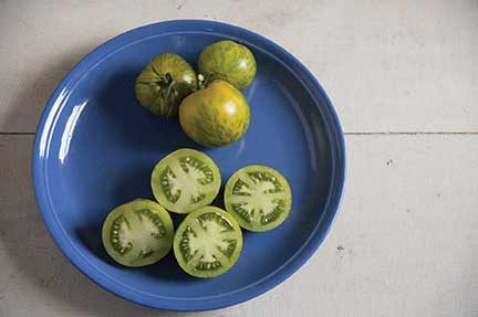 Green Zebra Grafted Tomato