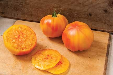 Margold Grafted Tomato