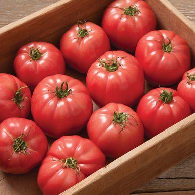 Pink Wonder Tomato CA