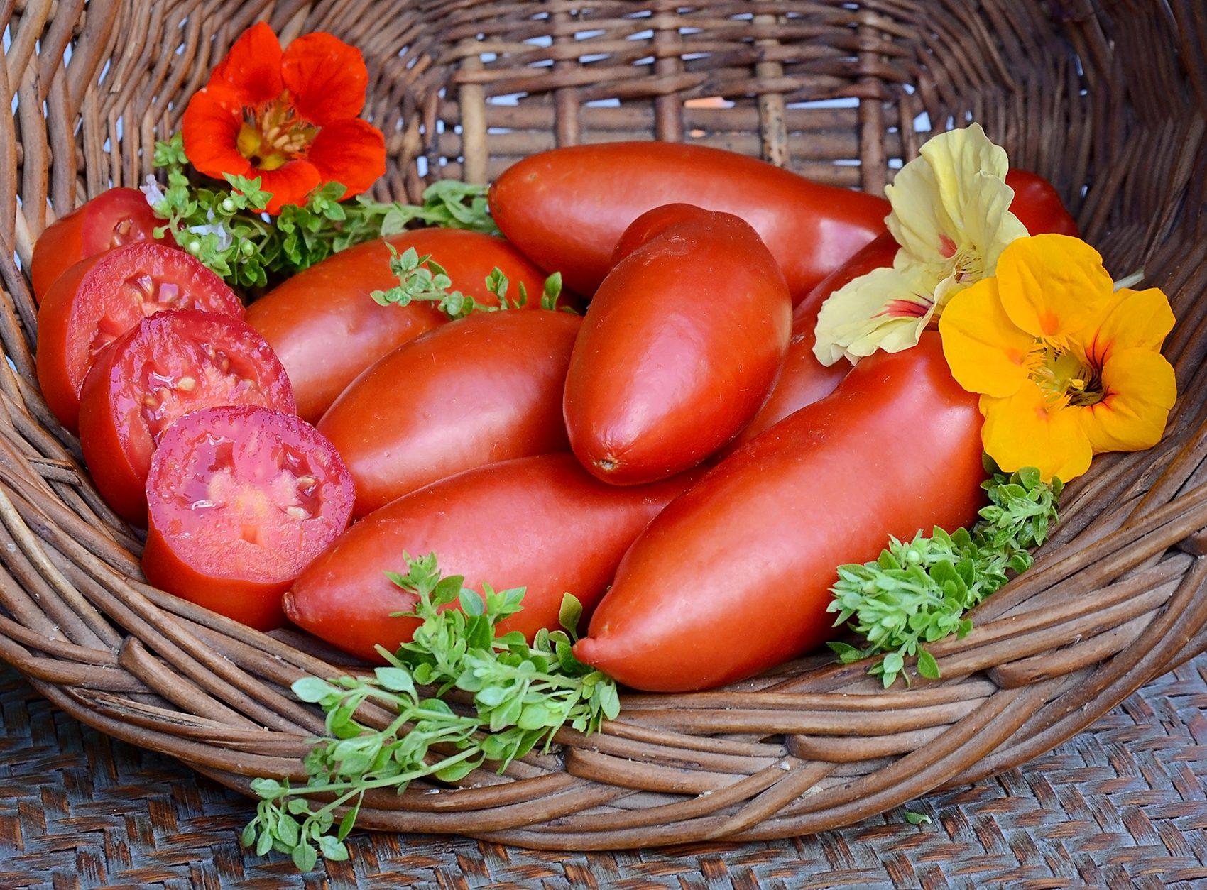 Pozzano (Greenhouse) Tomato