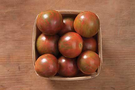 Bumble Bee Purple Tomato