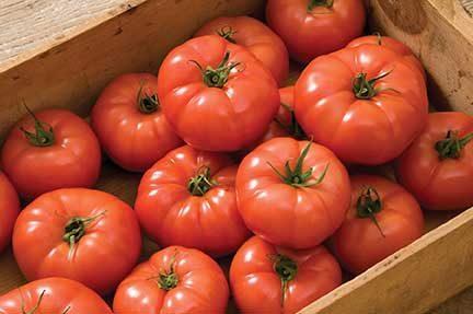 Rebelski Grafted Tomato
