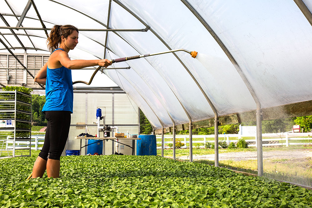 Careers | Banner Greenhouses