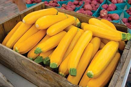 Golden Glory Squash, Summer