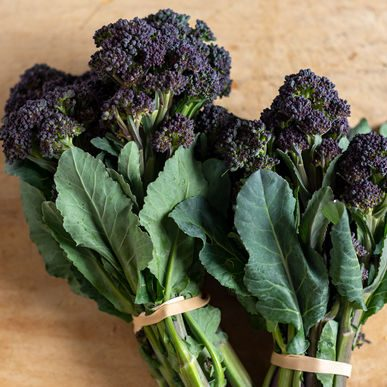 Burgundy Broccoli