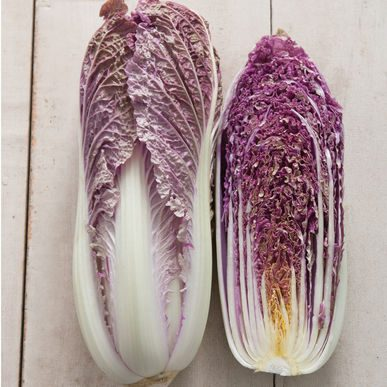 Red Dragon Cabbage