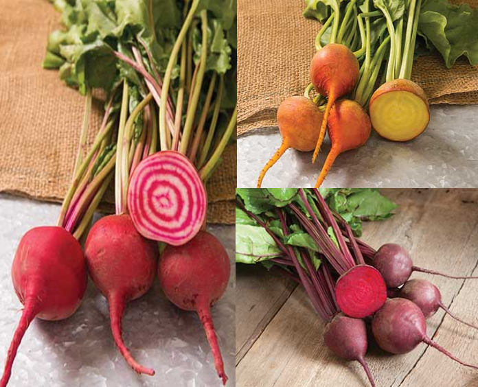 Beets Collection