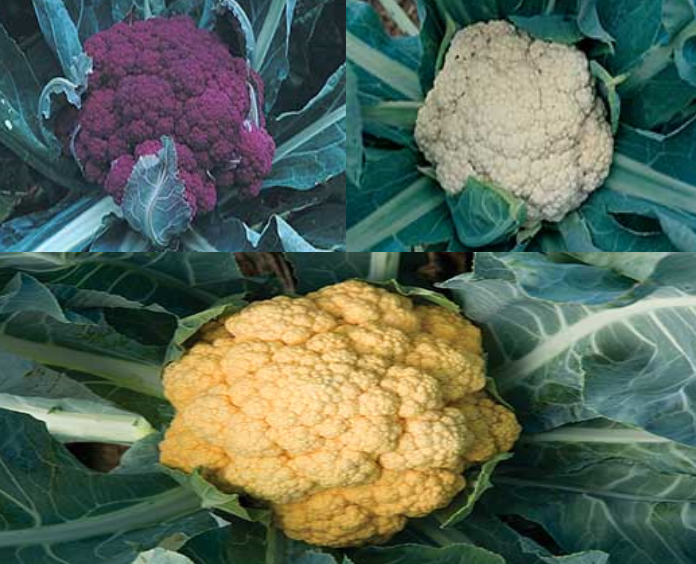 Cauliflower Collection